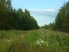 Лесные цветы. Рассказ детям