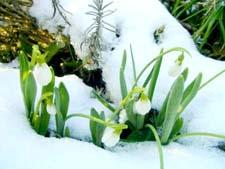 Как растения готовятся к весне. Рассказ детям