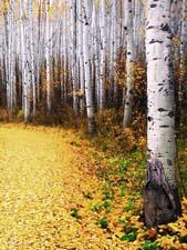 Стихи про осень Бальмонта