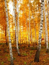 Стихи про осень С.Есенина