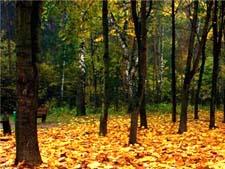 Стихи про осень Сурикова
