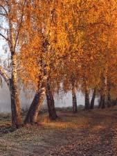 Стихи про осень Тютчева