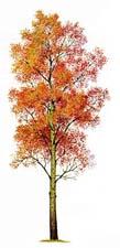 Сказка про осеннее дерево
