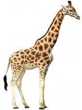 Сказка про жирафа