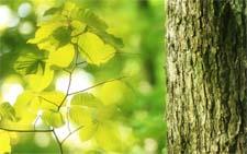 Благодарственное письмо растениям за вклад в поддержание жизни на Земле