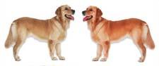 Сказка про двух собак