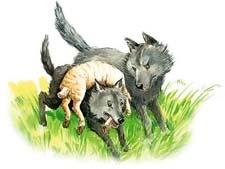 """Рассказ Л.Н.Толстого """"Как волки учат своих детей"""". Слушать"""