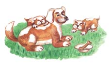 Как собака заботится о потомстве