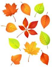 Стихи про листья деревьев