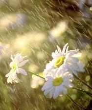 Стихи про ожидание дождя