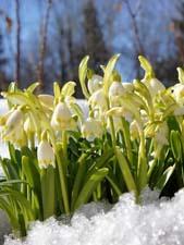 Красивый рассказ о весне
