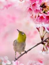 Текст «Весна»