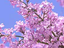 Стихи про цветущую весну
