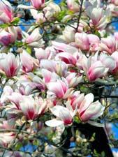 Сочинение «Весна»