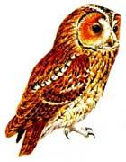 Сказка на ночь про задумчивую сову. Читать и слушать