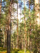 Летом в лесу. Короткий рассказ