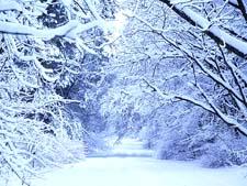 Текст-описание «Лес зимой»