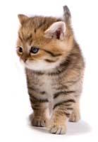 Рассказ о котенке