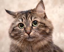 Рассказ о коте