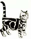 Сказка на ночь про разозленного кота. Читать и слушать