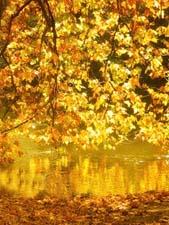Рассказ «Золотая осень»