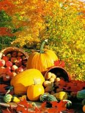 Сочинение «За что я любою осень»