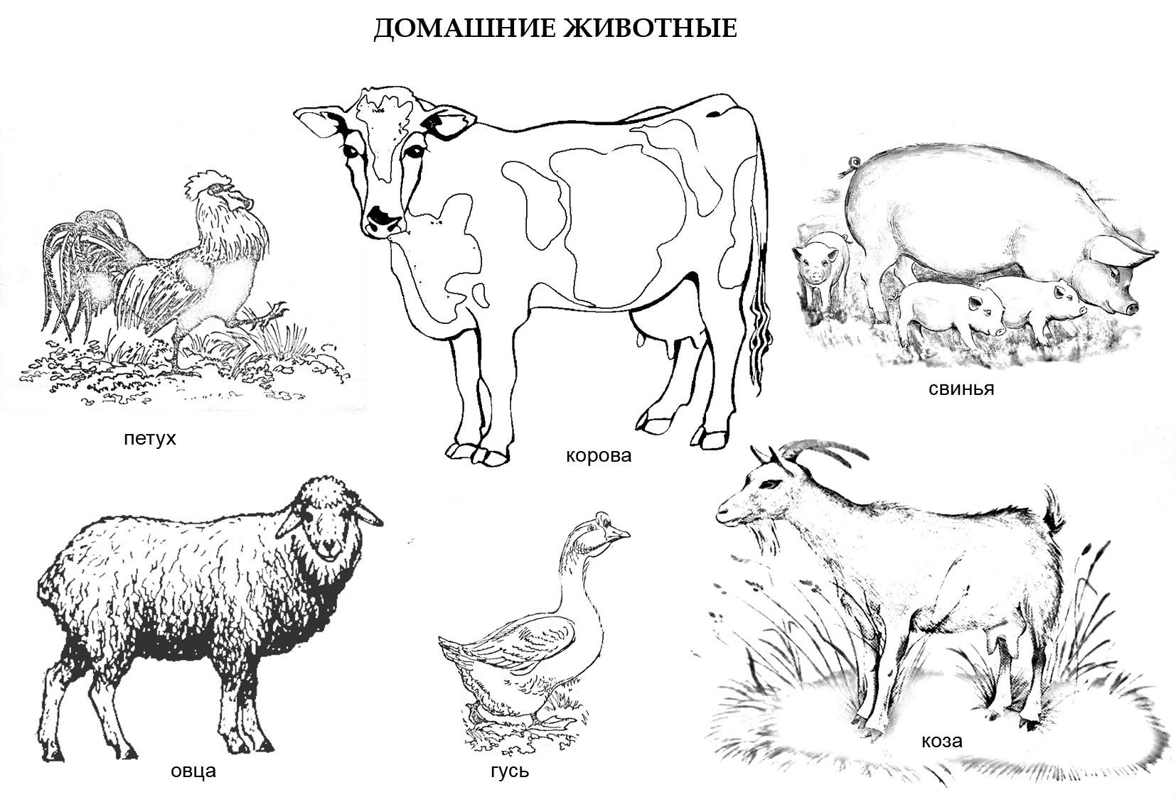Птицы и животные раскраски детские: Раскраска «Домашние животные»