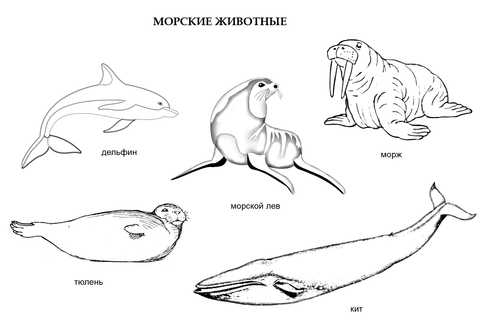 раскраска морские животные