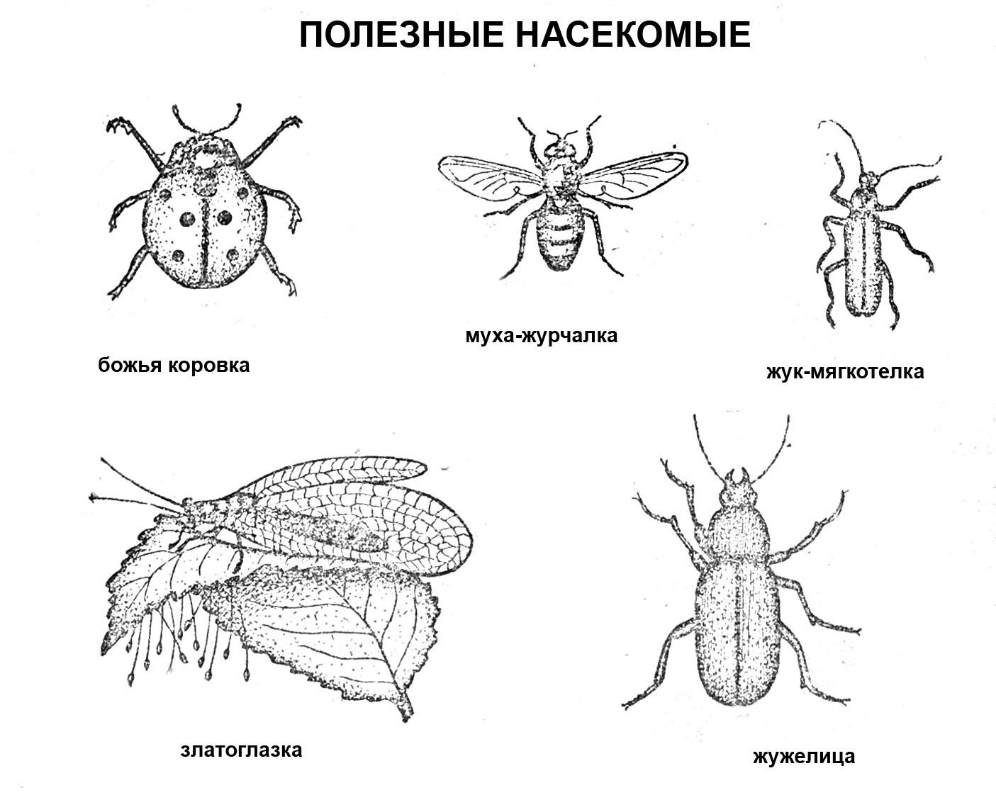 раскраска полезные насекомые с названиями