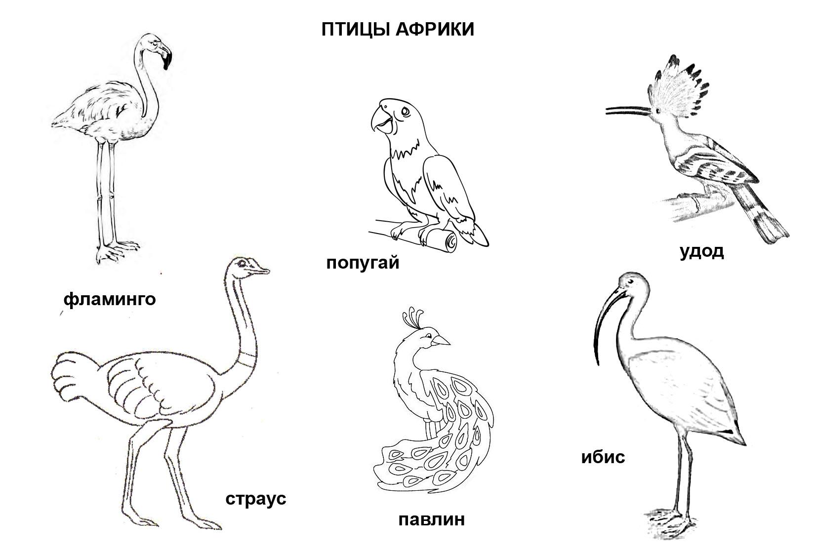 Птицы и животные раскраски детские: Раскраска «Птицы Африки»