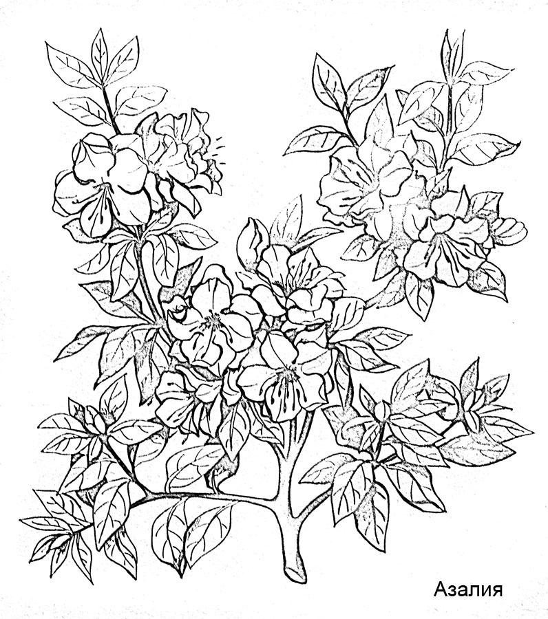Раскраски «Цветы — круглый год»