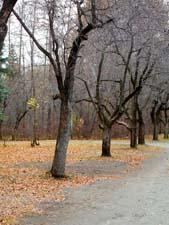 Стихотворения Пушкина А.С. про осень