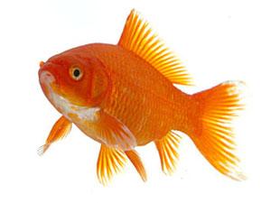 Скачать Игру Про Рыб - фото 6