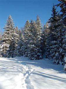 Стихи Пушкина о зиме - слушать
