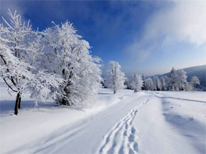 Закрутка огурцов хрустящих на зиму