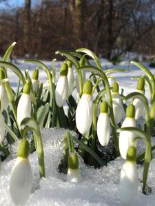 Картинки о весне с рассказом