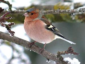 Запела птицей весна выведения из запоя на дому круглосуточно