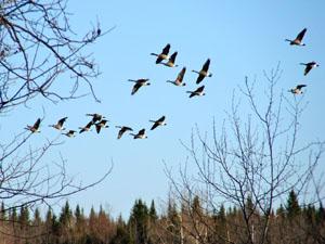 Картинки птиц которые прилетают к нам весной