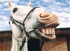 Шуточные стихи про лошадь