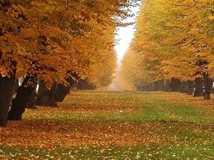 Осень в стихах Лермонтова