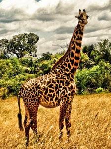 """Викторина """"Животные Африки"""" (с ответами)"""