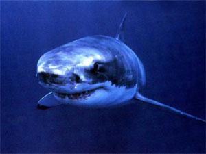 Загадки про морских и речных животных