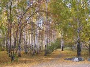 Осень в стихах Афанасия Фета
