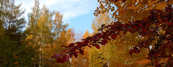Стихи Кюхельбекера про осень