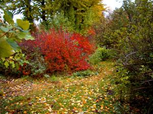 Детская сказка про Осень - слушать сказку