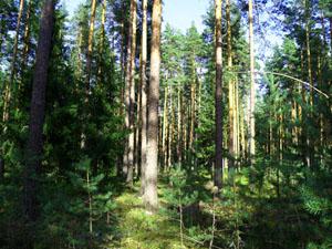 Лето в лесу. Рассказ детям