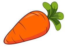 Морковь рисунок