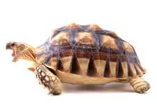 Сказка Черепахи и раковинки