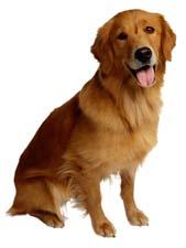 Загадки про собаку