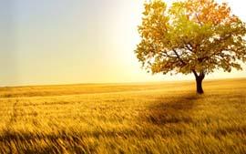 Стихи о поле